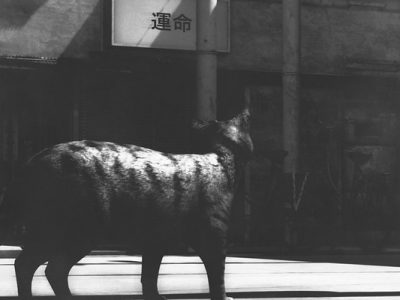 Wandering….